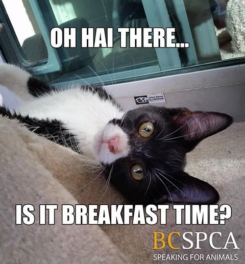 This is a pretty great face to see every morning! Meet the adorable Emerald at the BC SPCA South Okanagan-Similkameen Branch