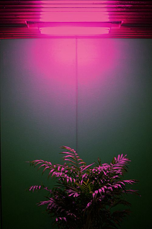 I really want a pink light like this