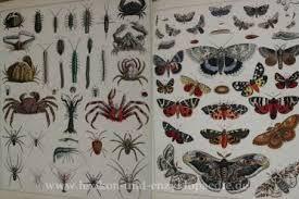 Bildergebnis für lexikon der botanik