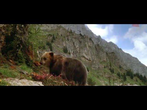 A medve 1988 Teljes Film HD 720P