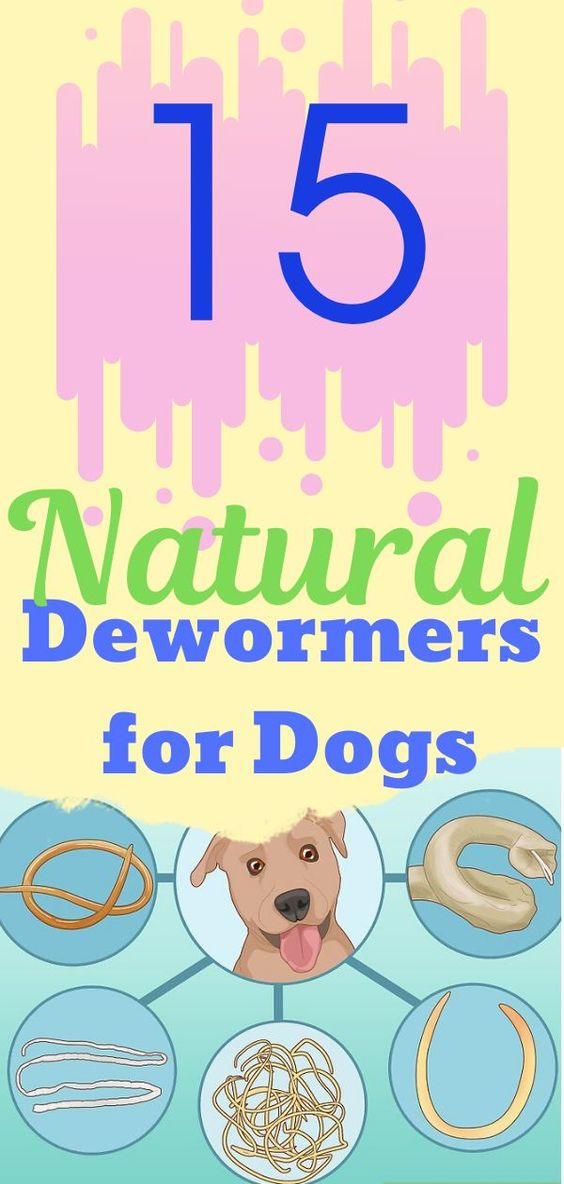 15 Natural Dewormers For Dogs That Are Safe And Efficient In 2020