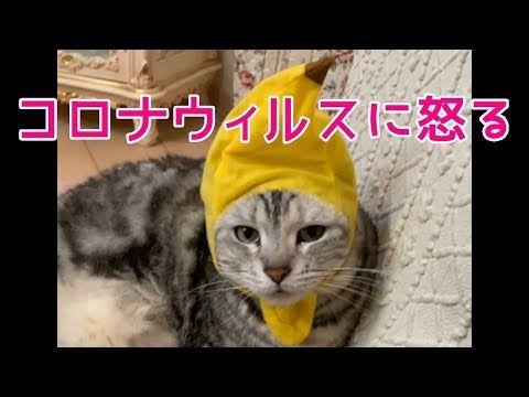 しゃべる 動画 猫 しゃべる猫?スッキリで紹介された最新動画が面白い!