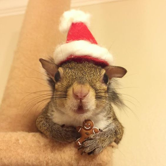 Jill  the squirrel-This little elf just reminded me it's December. Guess I need to start Christmas shopping.Instagram this_girl_is_a_squirrel