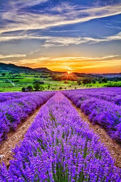 Lavender Field at Sunset in Bulgaria | Images | Pinterest ...