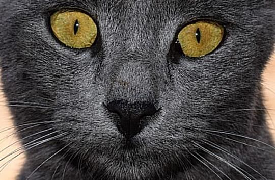 Find The Perfect Grey Cat Names For Your Kitten Choose From Male Female Grey Cat Names As Well As Grey And Whit In 2020 Grey Cat Names Grey And White Cat