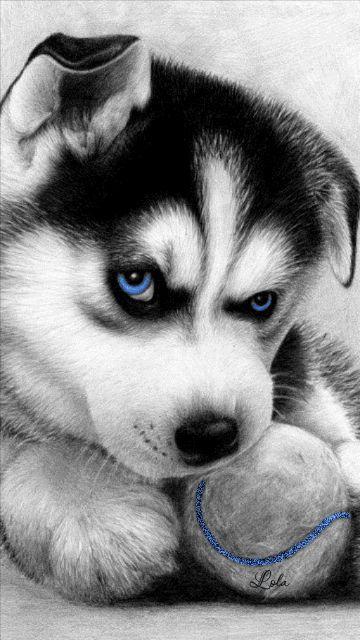 blue eyed puppy,,,color splash,,,