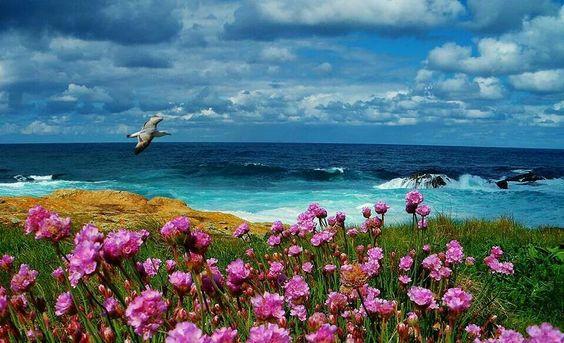 海と綺麗で美しい花畑
