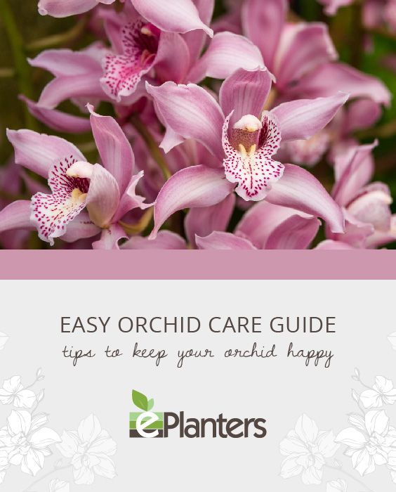Easy Orchid Care Guide Orchid Care Orchids Planting Flowers