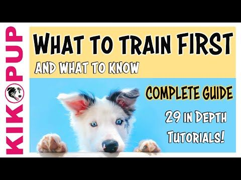 Complete Guide To Puppy Training What To Train First Youtube
