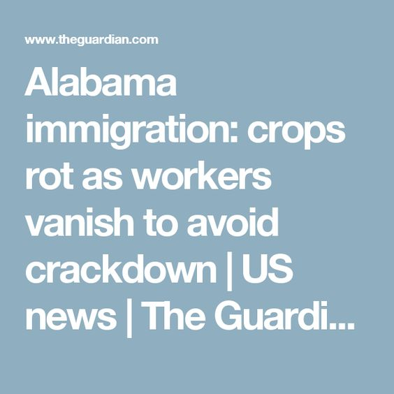 Alabama immigration crops rot as workers vanish to avoid crackdown