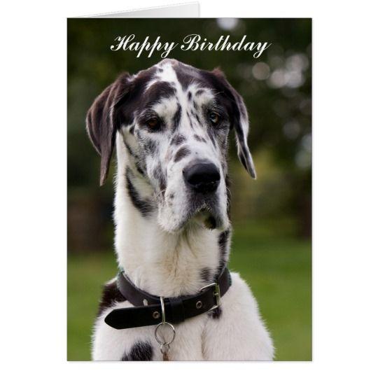 Great Dane Dog Happy Birthday Greetings Card Zazzle Com Happy