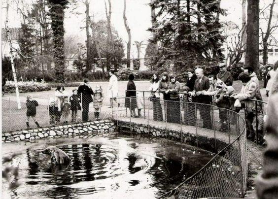 Bobby le phoque 1953 1992 au jardin botanique de for Jardin botanique tours