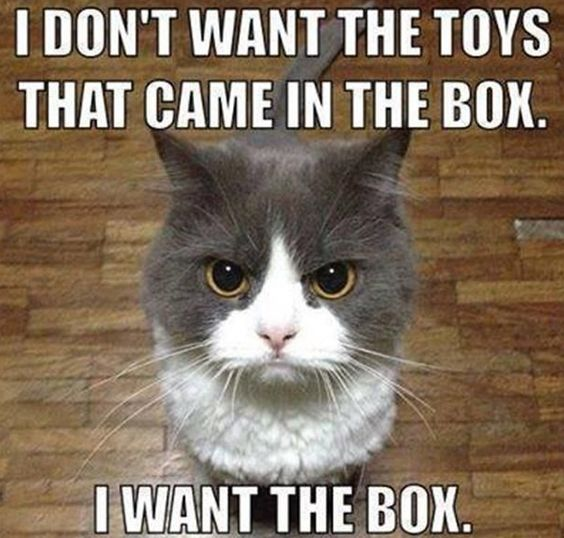 Don't forget to buy gifts for the love of your life!... aka the cat (Gallery)