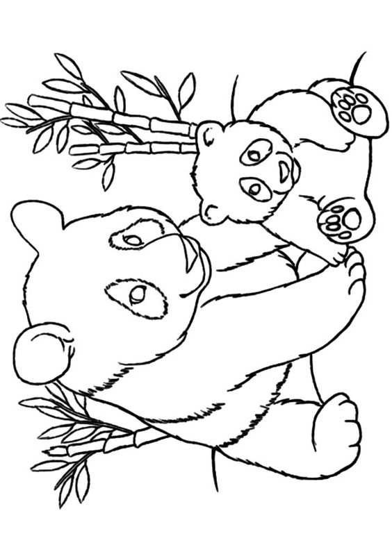 Coloring, Panda bears and Coloring pages on Pinterest