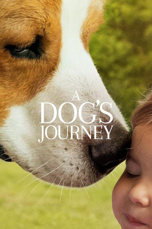 Ver Tu Mejor Amigo Un Nuevo Viaje 2019 Pelicula Completa Online En Espanol In 2020 A Dog S Journey Full Movies Online Free Free Movies Online