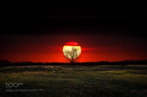 by petrus71  landscape sunset tree meadow --- petrus71