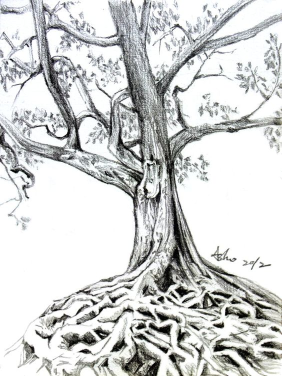 how to draw a dead tree in pencil