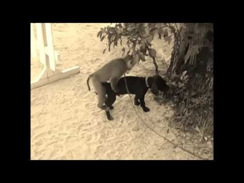 Monkey Tries To Have S E X With Dog Monkey With Dog Funny Video