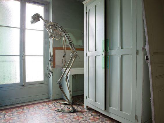Marc Da Cunha Lopes photography #skeleton #surreal #surrealism #dinosaur #interiors #photography #photos #bones #everyday #archaeology