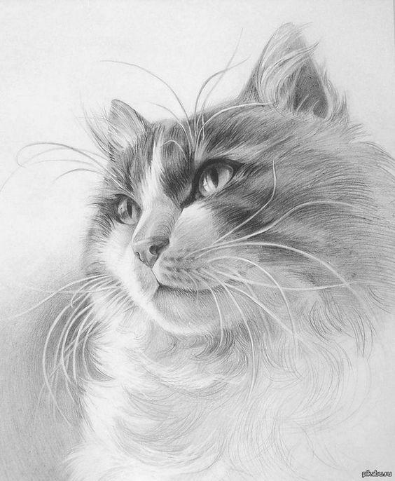 Рисунок карандашом, Просто кот.