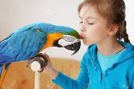 """Résultat de recherche d'images pour """"peinture oiseaux exotiques"""""""