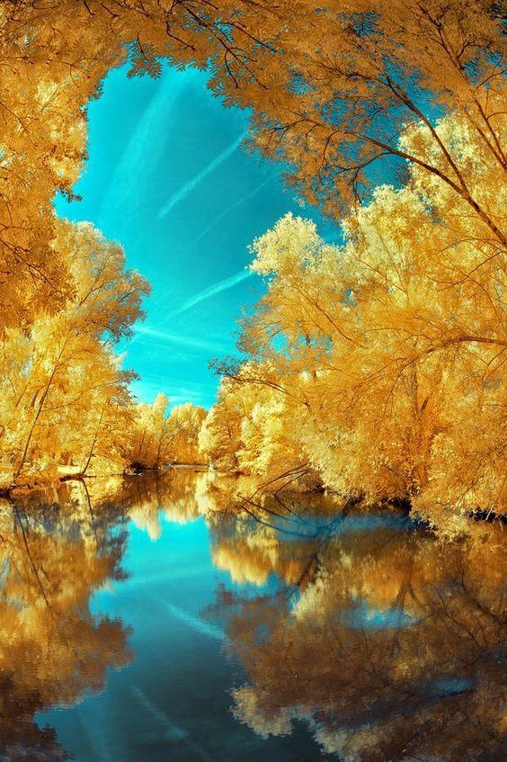 Yellow trees over water.  Photography: David Keochkerian.