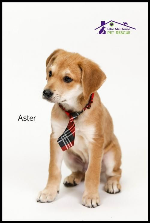 Aster S Web Page On Take Me Home Pet Rescue Inc Dog Adoption Animal Rescue Pets