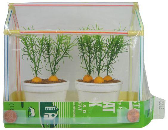 To do make mini greenhouse half gallon milk carton for How to make a small indoor greenhouse