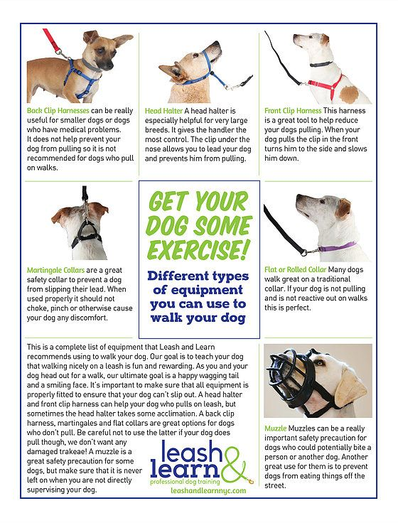 Leash And Learn Professional Dog Training Nyc Dog Training