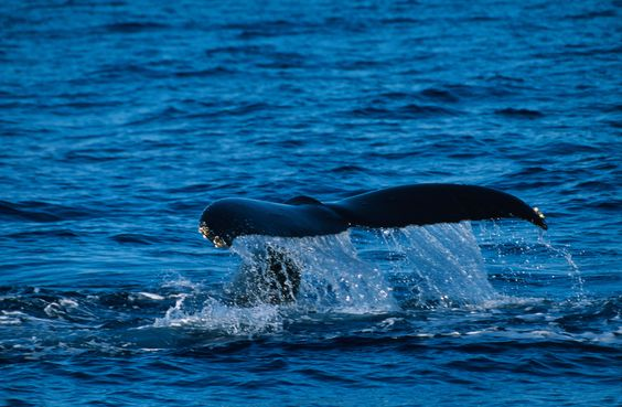 52-Hertz song of world's loneliest whale