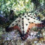 Star fish/Sea stars | Dusky's Wonders