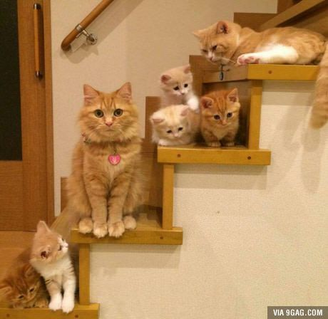 Stairday for the Kitty family