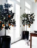 Love the orange trees best