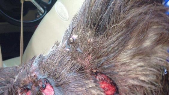 Petition update · Dog dies from injuries received from being attacked while…
