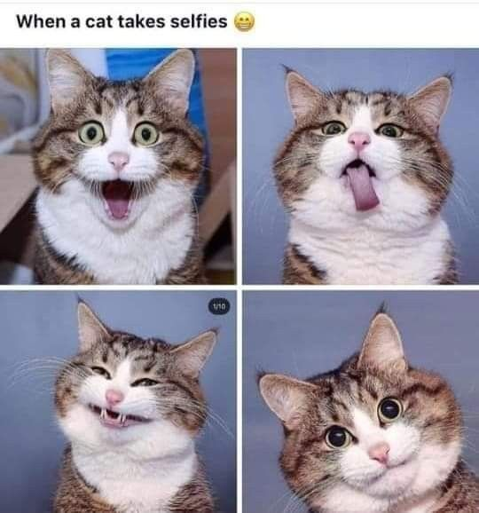 Cat Takes Selfies Cat Funny Feline Funny Cat Pictures Cute