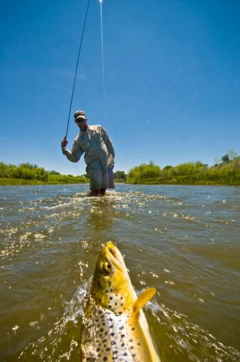 How to choose leaders and tippets when fly fishing field for Tippet fly fishing
