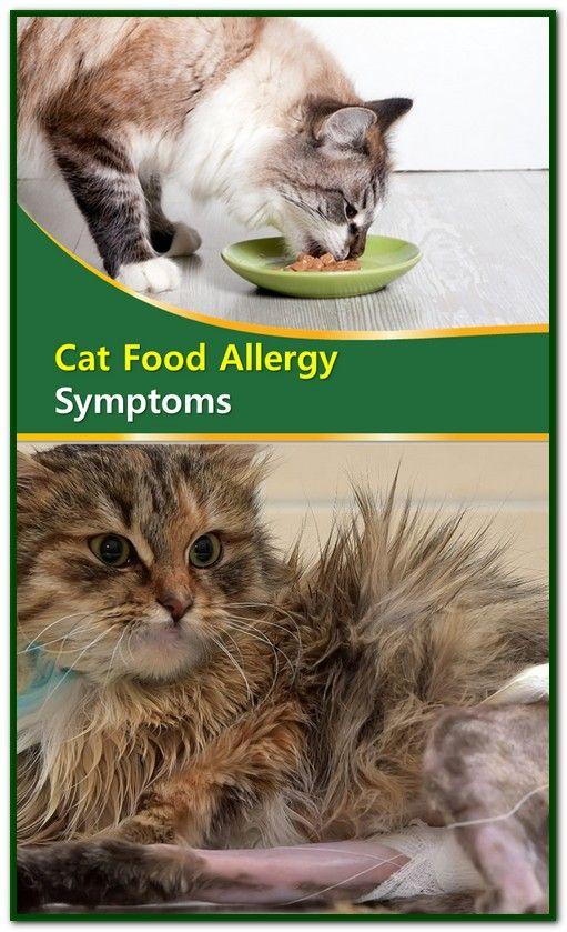 Cat Food Allergy Symptoms Cat Food Allergy Allergy Symptoms