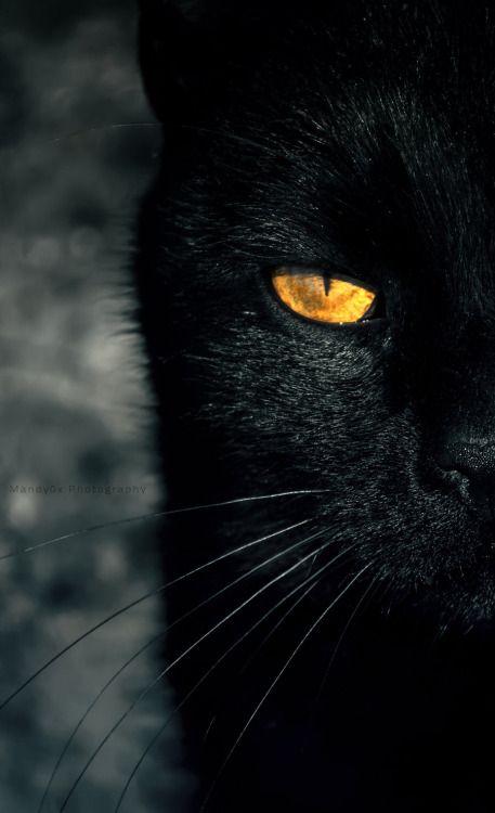 """"""""""" Black katter stjäla hjärtan inte själar. """""""":"""