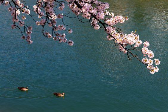 https://flic.kr/p/AB46rx | 浅野川 - 金沢 / Asano-gawa River in Kanazawa | I want to introduce wonderful Japan to the world.
