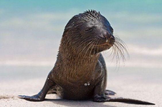 A sunning seal.