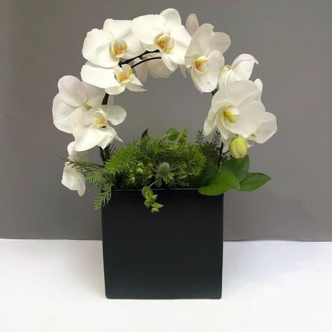 Alaric Flowers Magic Flower Delivery Nyc Same Day Orchids Nyc In 2020 Orchid Flower Arrangements Flower Arrangements Simple Creative Flower Arrangements