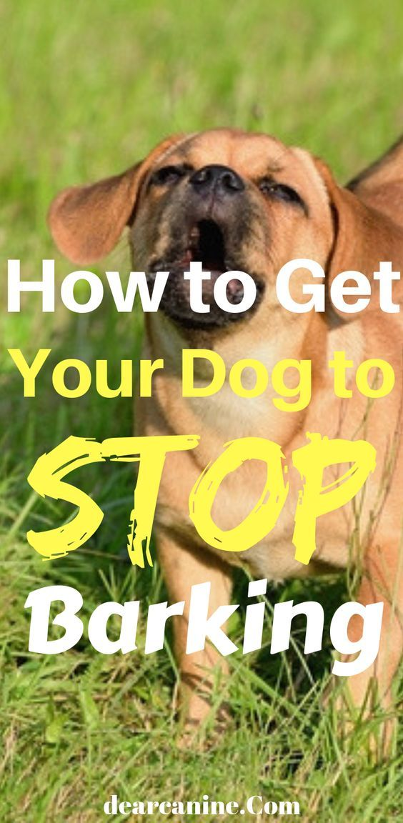 Stop Dog Barking 10 Easy Ways To Quickly Reduce Excessive Barking