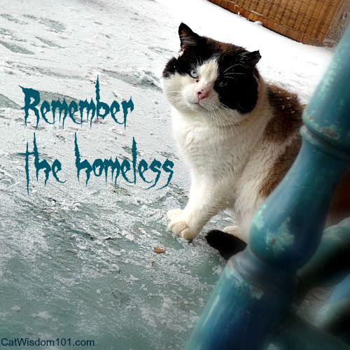 Please help homeless cats!