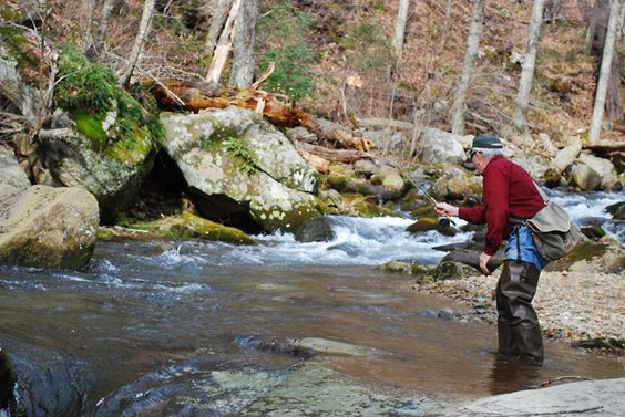 Shenandoah national park brook trout stream near luray for Shenandoah national park fishing