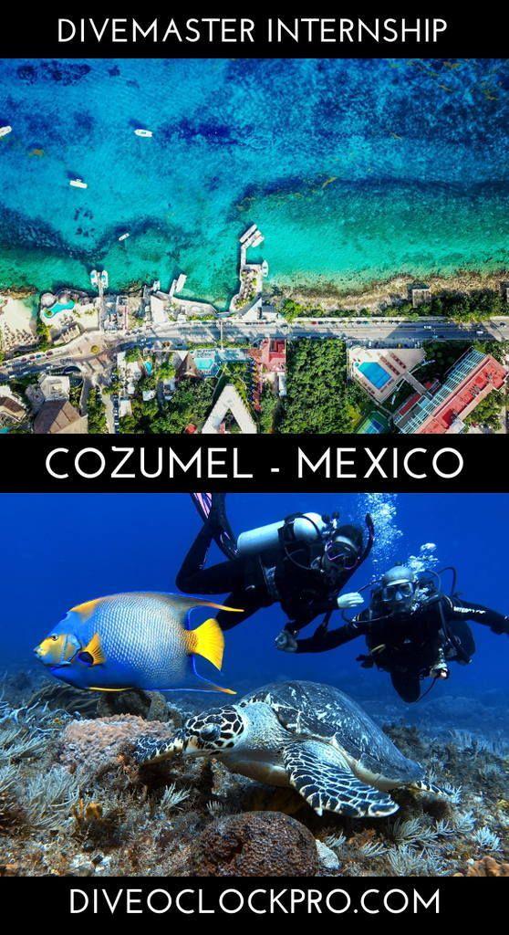 Padi Divemaster Course Cozumel Mexico In 2020 Cozumel Best Scuba Diving Scuba Diving Courses