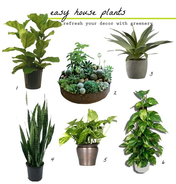 Green plants and snake plant on pinterest - Green leafy indoor plants ...