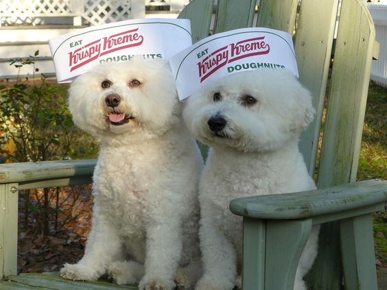 https://flic.kr/p/enrQnf | Krispy Kreme Doughnuts...Yum! | Traveler and Hudson showing their support to eat more Krispy Kreme Doughnuts!