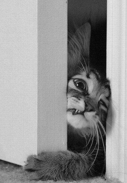 Cute Black Cat | cat animals cute Black and White bw vertical resentive resentive ...
