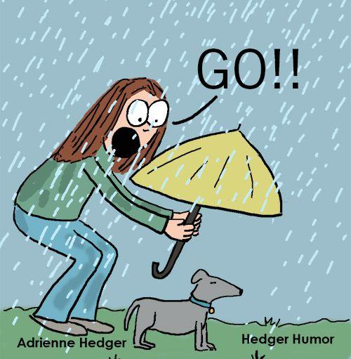 My Dog In The Rain Hedger Humor Rain Humor Funny Rain Quotes Rainy Day Quotes