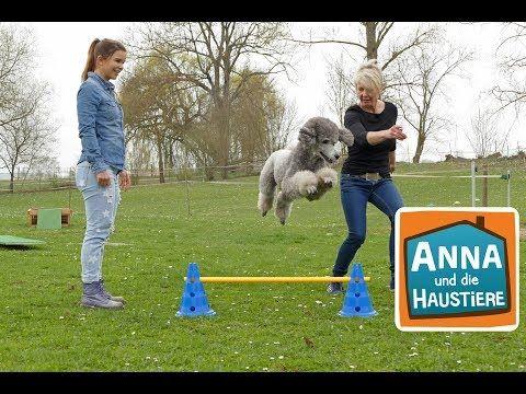 Pudel Haustiere Reportage Fur Kinder Anna Und Die Haustiere